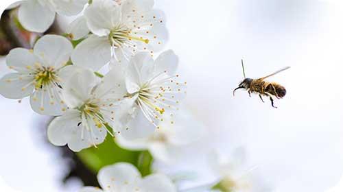 Attraktionslagen-blommor-och-bin