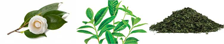 Grönt te -Collage