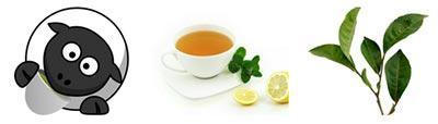 grönt-te-viktminskning