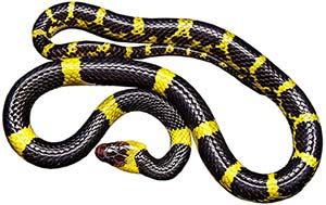 drömmar om ormar