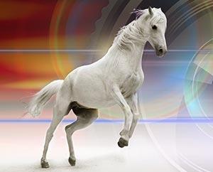 Drömmar-Häst-&-Lejon